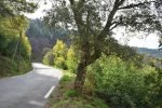 Mimosa Photo Gallery - Road in bloom