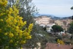 Mimosa Photo Gallery - Tanneron village