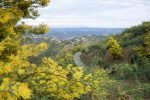 Mimosa Photo Gallery - Road in view